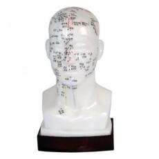 머리모형 XC-507