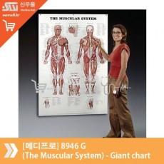 [메디프로]8946 G (The Muscular System) - Giant chart